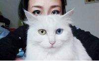 猫咪的眼睛怎么??